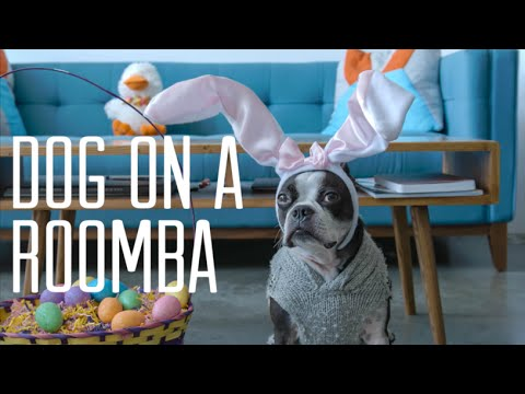 Dog on a Roomba Easter Edition