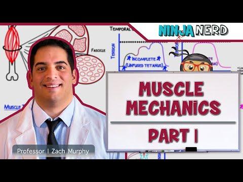 Myology   Muscle Mechanics   Twitch, Summation, & Tetanus   Part 1