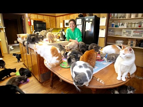 67 y/o Lady Lives With 1,100 Cats. Sounds Crazy? Wait To See How They Live.