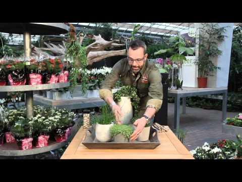Interieurvideo planten in het interieur