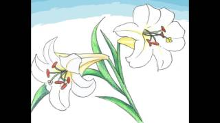 歌謠篇   大武魯凱語 08 bangabangale 百合花《傳唱篇》