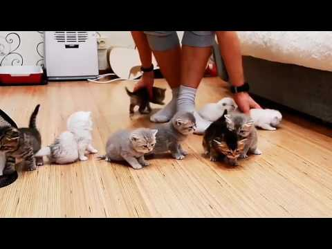 Guy Struggles to Herd 10 Adorable Kittens