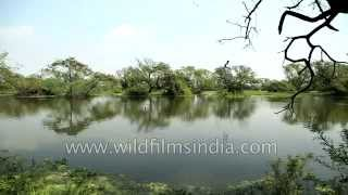 Bharatpur India  city photos : Bharatpur, India's best known bird sanctuary in Rajasthan
