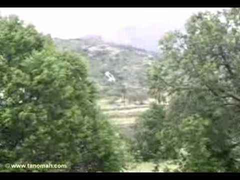 مشهد بعد المطر في غابات تنومة( ولد تنومة)