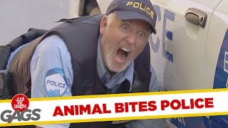 Cute Dog Bites Cop !, Just for laughs, Just for laughs gags, Just for laughs 2015