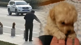 Video 5 Smallest Dogs You Won't Believe Actually Exist! MP3, 3GP, MP4, WEBM, AVI, FLV September 2018