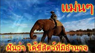 ฝันว่า ได้ขี่สัตว์ที่มีอำนาจหรือขี่พาหนะของผู้ใหญ่ ขึ้นเครื่องบิน สัตว์ที่มีอำนาจได้แก่ ช้าง หรือ เสือ ทำนายว่า ท่านจะได้เลื่อนฐานะท่านจะได้รับความสุข ตลอดทั...