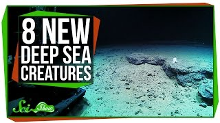 Video 8 Strange New Deep Sea Creatures MP3, 3GP, MP4, WEBM, AVI, FLV Juni 2019
