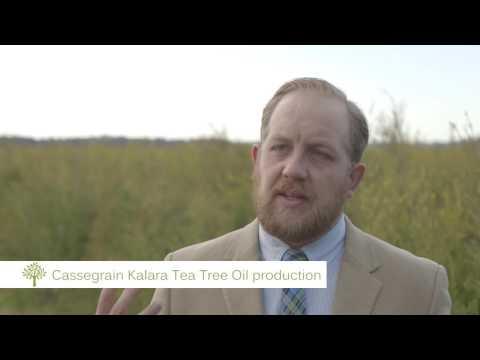 Cassegrain Kalara Tea Tree Oil: Production