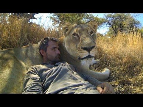 男子試圖擁抱野生獅子。接下來發生的事情讓我大跌眼鏡!
