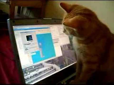 Kot i wygaszacz ekranu