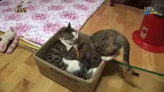 Video SBS [동물농장] - 젖물리는 수컷 고양이 딸랑이의 변심 MP3, 3GP, MP4, WEBM, AVI, FLV Agustus 2018