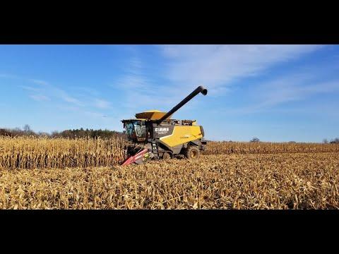 Ontario corn harvest