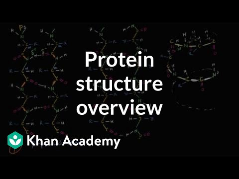 Overview of protein structure | Macromolecules | Biology | Khan Academy