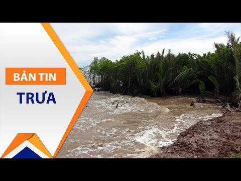 ĐBSCL: 'Nghìn tỷ đứng nhìn' rừng ngập mặn 'thoi thóp' | VTC - Thời lượng: 3 phút, 17 giây.