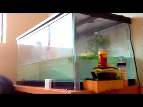 Build a Low budget Fish/Turtle aquarium tank! UNDER 100$ On budget