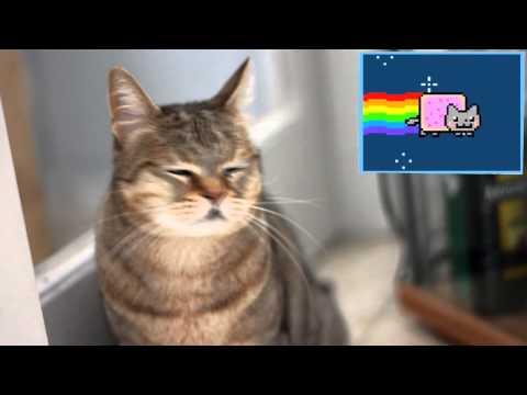 Cats React To Viral Videos – NYAN CAT
