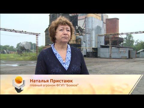 """Отзыв о зерносушилках в хозяйстве """"Боевое"""""""