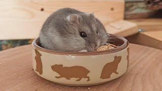 Hamster Wrestles A Peanut by ErinsAnimals