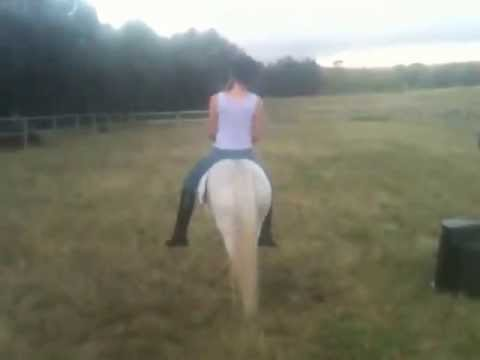 Video Mini Pony riding Girl download in MP3, 3GP, MP4, WEBM, AVI, FLV January 2017