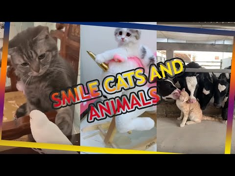 Cute and Funny Cat Videos to Keep You Smiling MEOW TV 2