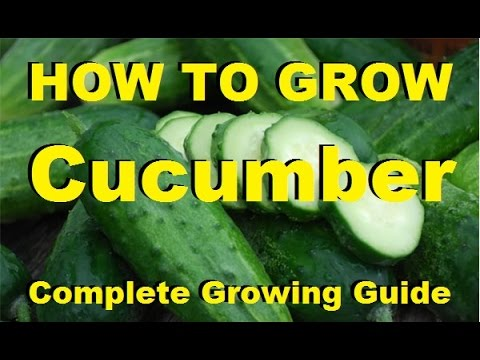 How to Grow Cucumbers - Complete Growing Guide