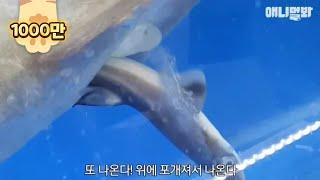 Video A  dogfish shark trying to give birth at a sushi restaurant tank MP3, 3GP, MP4, WEBM, AVI, FLV Juni 2018