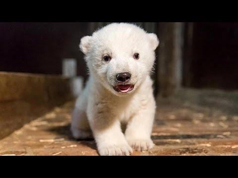 Συγκίνηση για το θάνατο μικρής πολικής αρκούδας σε ζωολογικό κήπο του Βερολίνου