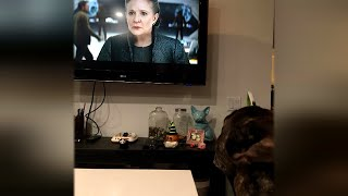 Video Carrie Fisher's French Bulldog Looks Sadly at TV During New 'Star Wars' Trailer MP3, 3GP, MP4, WEBM, AVI, FLV Oktober 2017