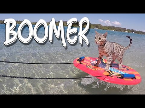 Boomer the Skimboarding Cat
