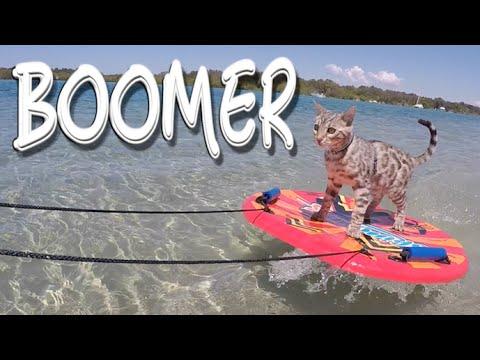 Boomer the Skimboarding Cat