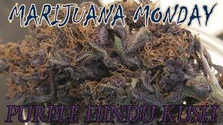 Purple Hindu Kush Marijuana Monday by Urban Grower