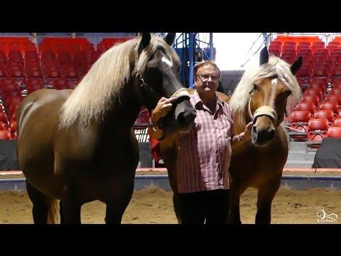 Des Chevaux de Trait Comtois au Cirque National Suisse KNIE