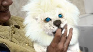 Video Most EXPENSIVE Pets In The World! MP3, 3GP, MP4, WEBM, AVI, FLV Juni 2018