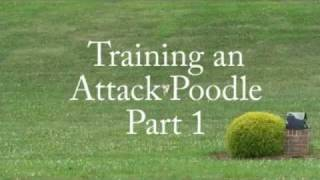 Training An Attack Poodle Part 1