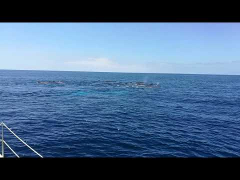 sperm whales family
