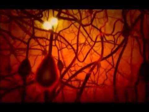 PBS The Secret Life of the Brain - The Baby's Brain (mini).wmv