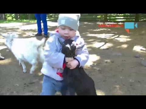 Děti a kozy