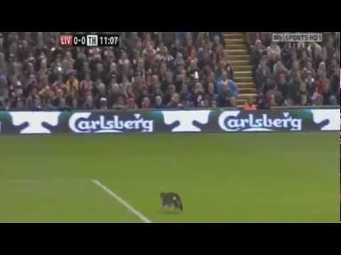 Liverpool v Tottenham: Gato invade o campo
