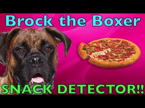 boxer: really pizza detector!