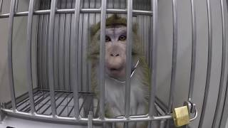 Testy na zwierzętach w niemieckim laboratorium pokazane od środka
