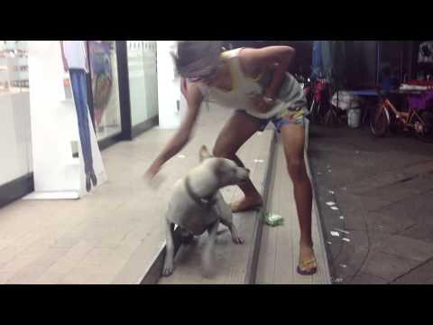 หีหมา - http://www.facebook.com/threebrain2012?ref=hl แฟนเพจพวกเราครับ :D 55555555 หมาสะดุ้ง.