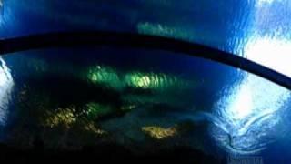 Shark Reef Aquarium, Mandalay Bay