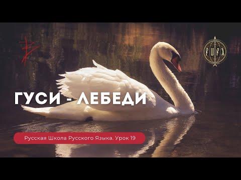 Русская школа русского языка урок 19
