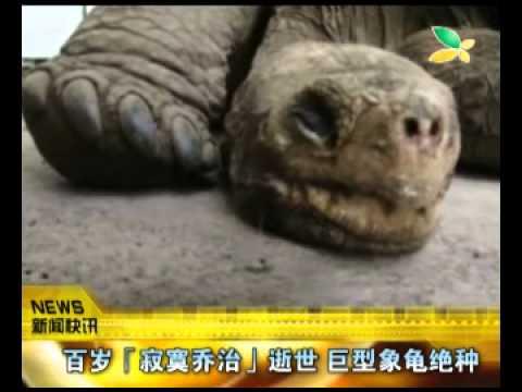 CQTV:百岁「寂寞乔治」逝世 巨型象龟绝种