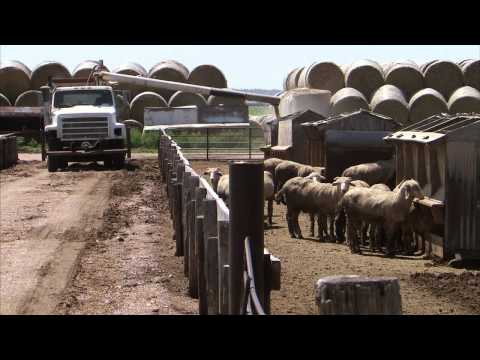 how to harvest alfalfa