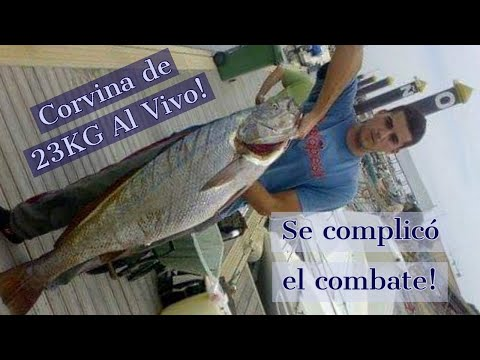 Jornada de pesca al vivo: Corvina de 23 kg