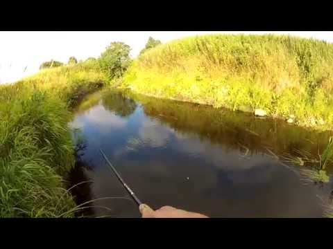 Brown trout fishing (in Estonia) 2
