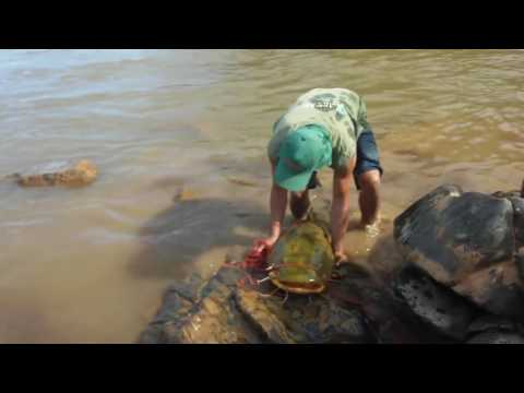 Pescando jaú na mão com Pesca Sossegada