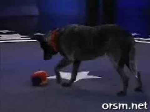 [Must watch] Smartest dog in the world